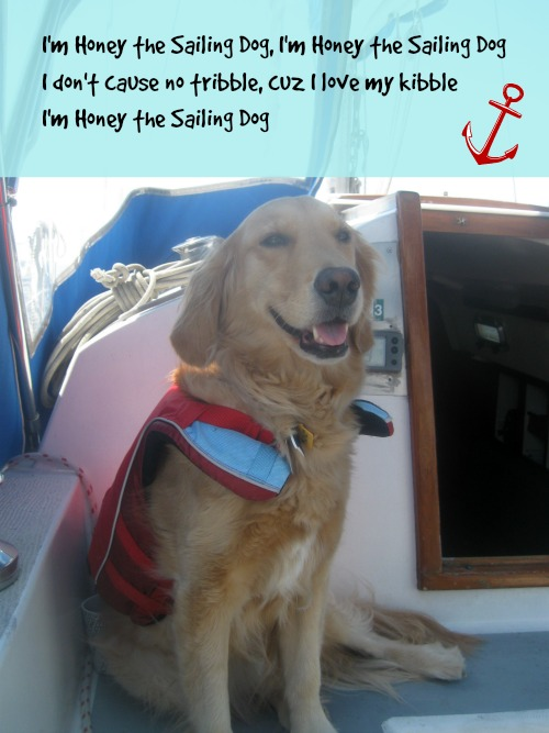 Honey the sailing dog.