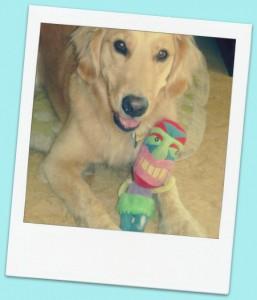 Honey the golden retriever loves her tiki toy.