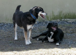 Shadow plays with Sally.