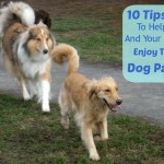 10 Tips For Enjoying The Dog Park