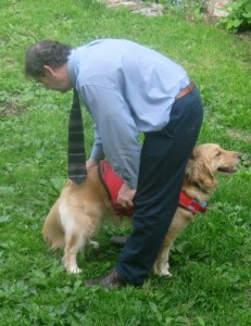 Honey the golden retriever in a compromising position.
