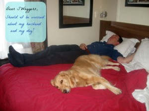 Honey the golden retriever on bed.