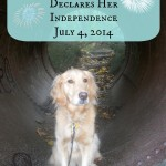 Honey Declares Her Independence