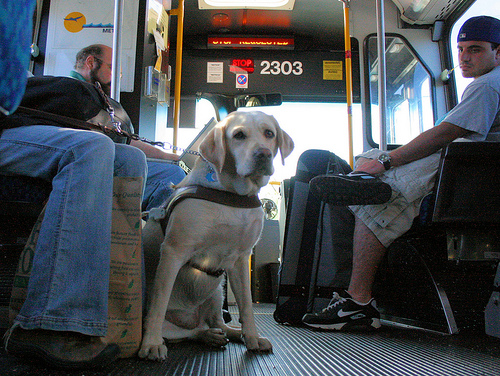 Guide dog on a bus.