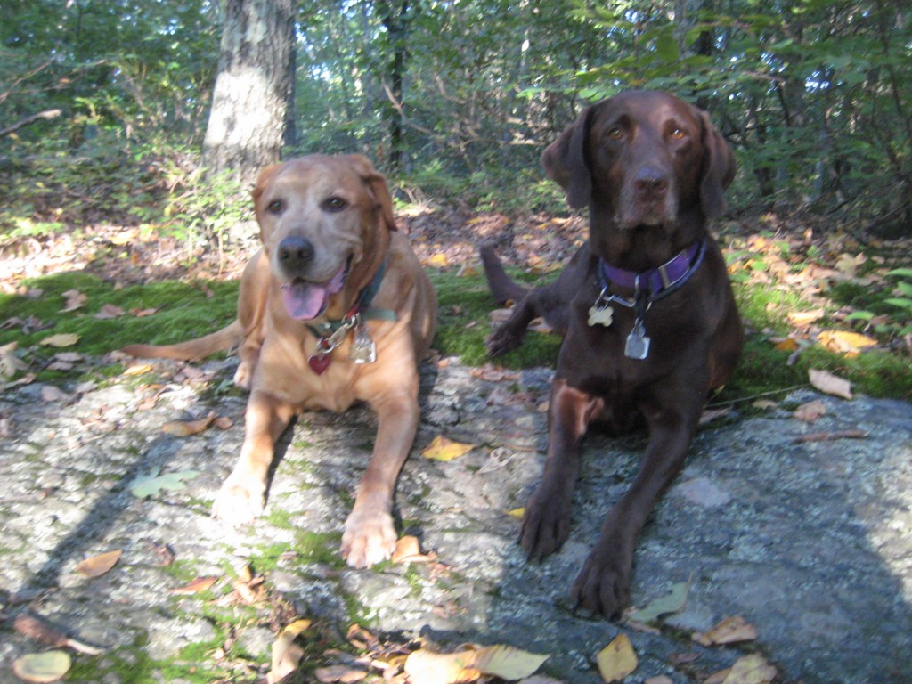Sampson and Delilah in the woods.