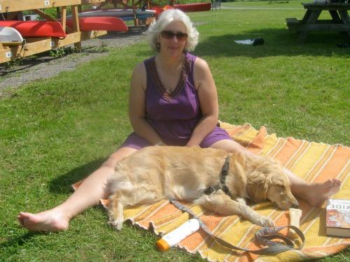 Honey the golden retriever naps in the sun.