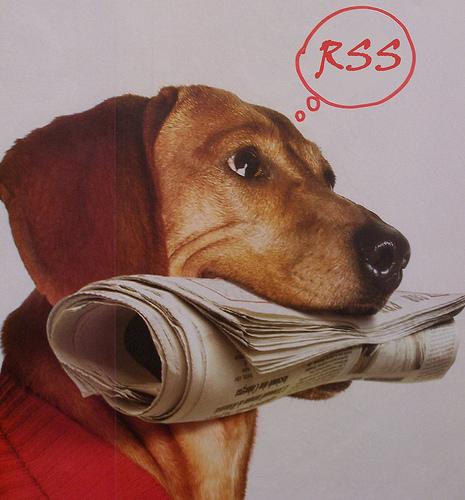 Dog delivering a newspaper.