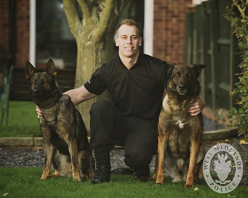 Police officer with two Belgian Malinois.