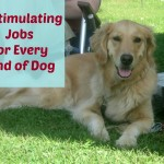 17 Stimulating Jobs For Your Dog
