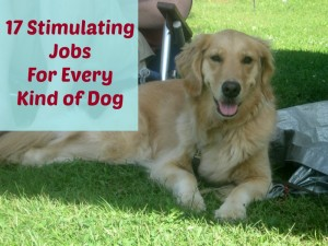!7 Stimulating Jobs For Any Dog.