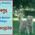 Reasons dogs are better than people with golden retriever.