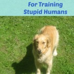 5 Tips For Training Stupid Humans