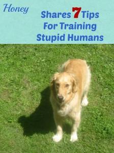 Training stupid humans.