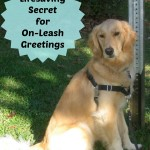 A Life Saving SECRET For Introducing Dogs On Leash