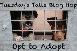 Tuesdays Tails Adoption Blog hop badge.