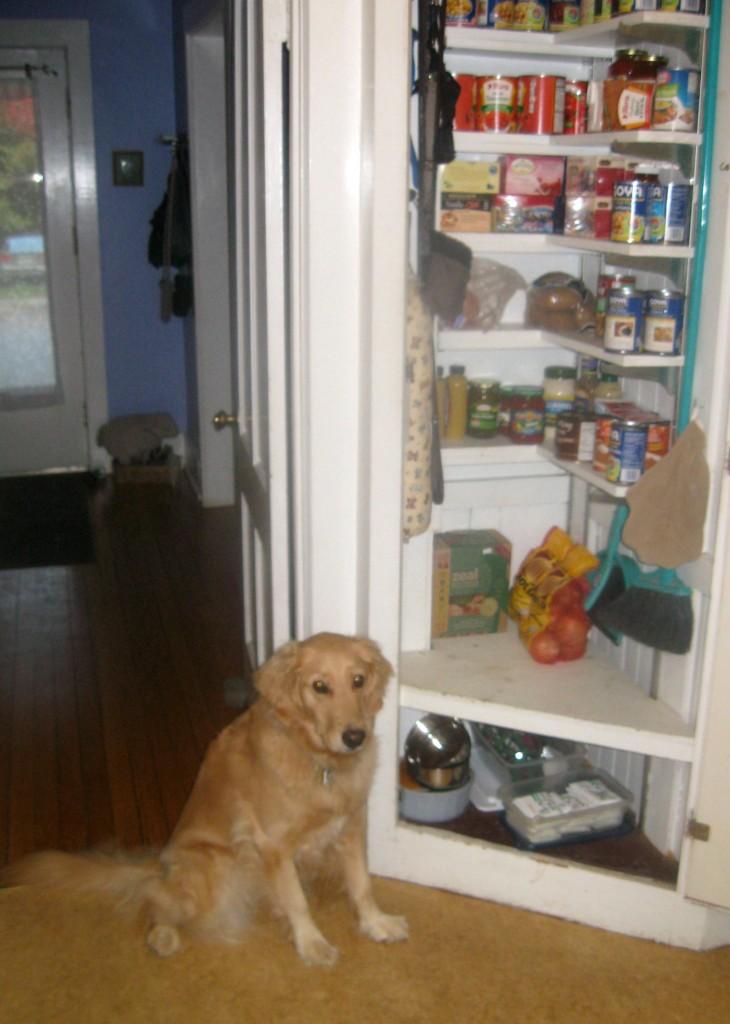 Honey the golden retriever checks out the pantry.