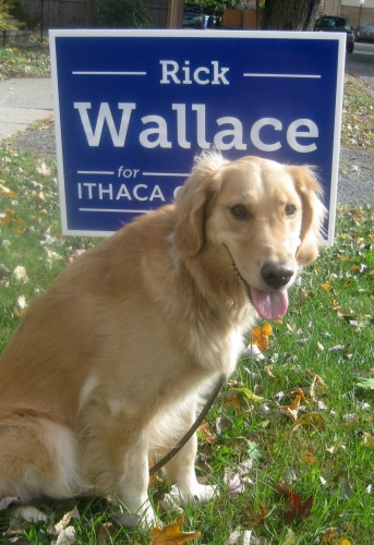 Honey the golden retriever sees a candidate's campaign sign.