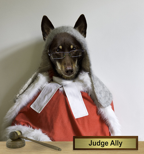 Ally is a dog judge.