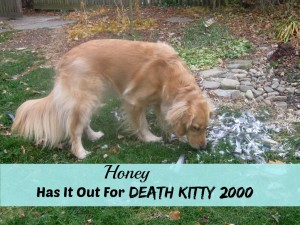 Honey the golden retriever looking for Death Kitty 2000.