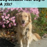 Why Should I Yell At My Dog Because Your Dog Is A Jerk?