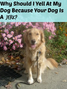Honey the golden retriever and a statement about jerk dogs.