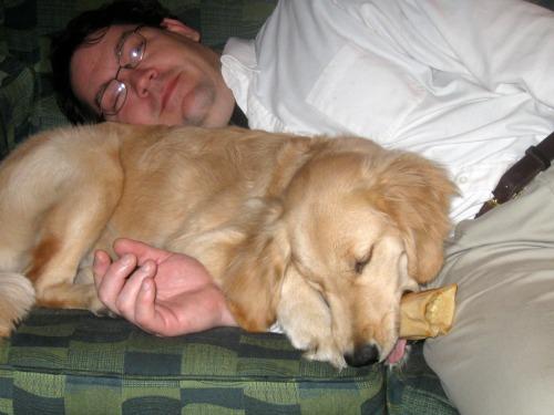 Honey the golden retriever acts like a pillow.