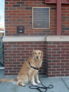 Honey the golden retriever at the credit union.