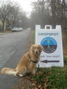 Honey the golden retriever at the food waste recycling spot.