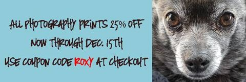 Mary Hone Photography is having a sale.