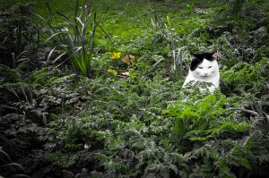 Black and white cat sits in the garden.
