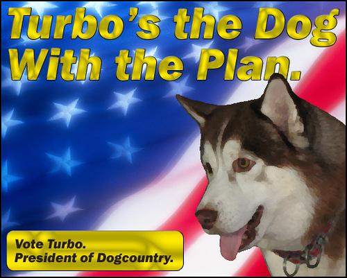 Elect Turbo the Malamute.