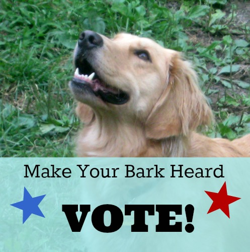 Honey the golden retriever wants you to vote.