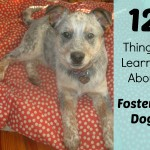12 Things I Learned While Fostering Dogs