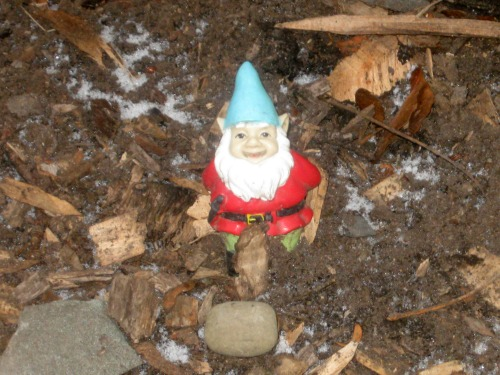 Gnome at base of tree in close-up.