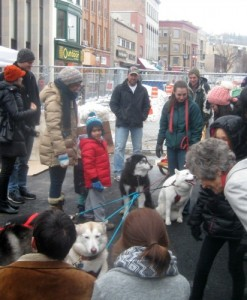 Sled dogs on the Ithaca commons.