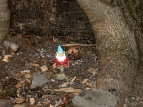 Small gnome at the base of a tree.