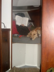 Honey the golden retriever surveys the boat from bed.