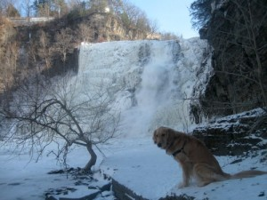 Honey the golden retriever looks like a vulture at Ithaca Falls.