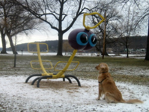 Honey the golden retriever talks to a worm on the playground.