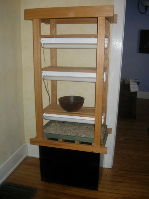 An oak seed starting stand.