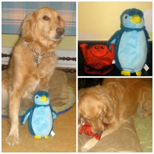 Honey the golden retriever got new toys for her birthday.
