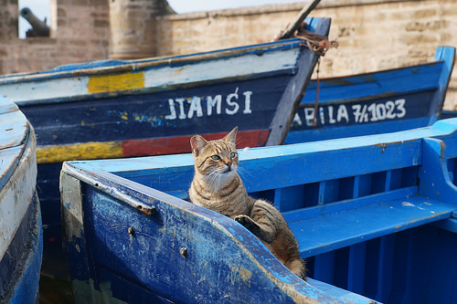 A cat sits in a Moroccan boat.