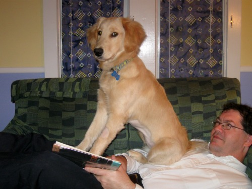 Honey the golden retriever sits on Mike's chest.