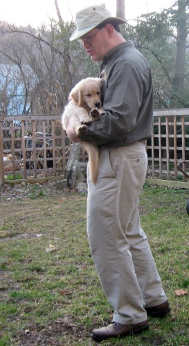 Honey the golden retriever puppy is carried by Mike.