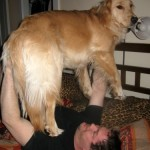 Mike lifts Honey the golden retriever.