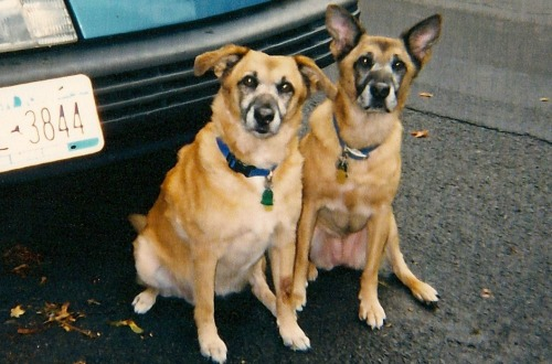 Agatha and Christie, litter mates, pose in front of the car.
