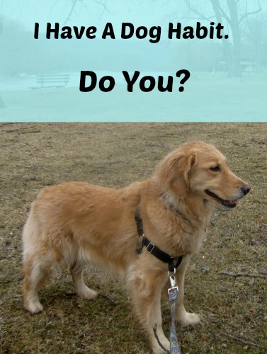 Honey the golden retriever is my dog habit.