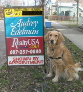Honey the golden retriever with for sale sign.