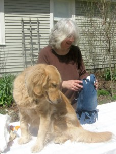 Honey the golden retriever jumped on a table.