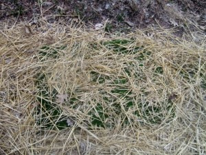 Astroturf mat covered with straw.